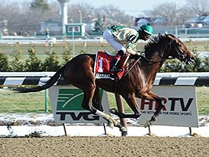 Impressive New York-breds Head Withers