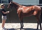 Fasig-Tipton Saratoga: Hip 46 Blame Filly