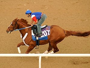Curlin Works Half-Mile in Dubai