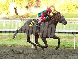 Tamarando wins the 2013 Real Quiet Stakes.