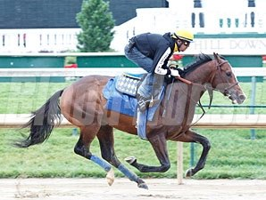Bodemeister jogs at Churchill Downs 5/14/2012
