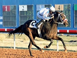 Local Hope Ol Winedrinker Who Wins Zia Derby