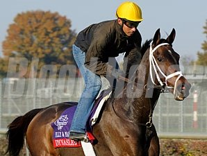 Dynaslew - Churchill Downs, Oct 29, 2011.