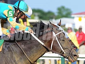 Nehro finishes 2nd to Alternation in the 2012 Pimlico Special.