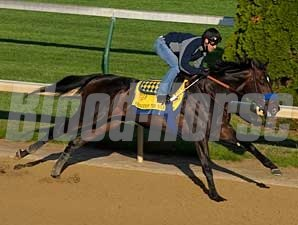 Pioneerof The Nile works at Churchill Downs on April 21