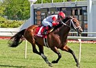 Dark Cove Lowers Course Record at Arlington