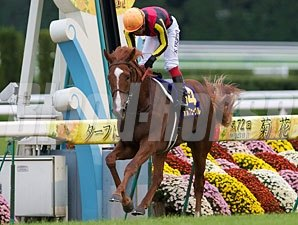 Orfevre wins the Kikuka Sho to complete the Japan Triple Crown.