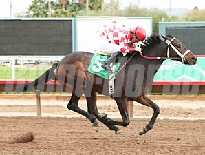 Beer Meister wins the 2011 Turf Paradise Derby.