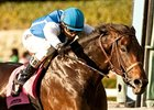 Silentio Packs Top Weight in 14-Horse Arcadia