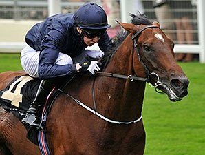 Declaration of War to Coolmore Ireland