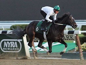 Stellar Field of Six in Breeders' Cup Distaff