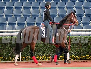 Grand Prix Boss - Hong Kong December 2012