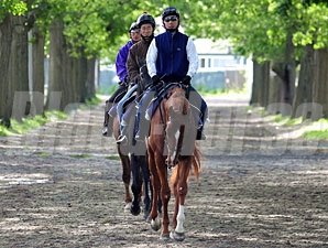 Casino Drive leads his stablemates to the track at Belmont Park.
