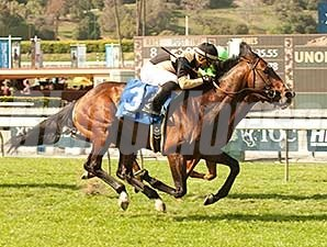 Flamboyant wins the 2014 La Puente Stakes.