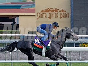 Mizdirection - Santa Anita October 25, 2013.