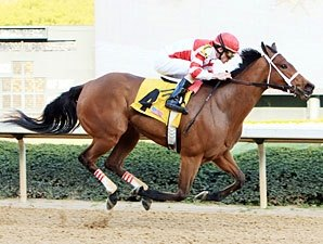 Apple Blossom: Havre de Grace Seeks GI Win