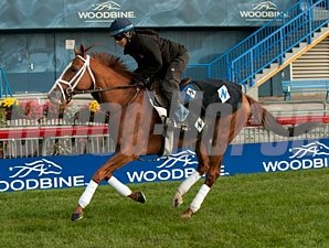 Prince Will I Am - Woodbine, October 13, 2012.