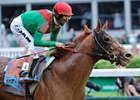 Animal Kingdom Confirmed for Belmont Stakes
