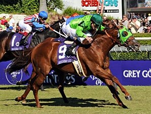 Turf Sprint Draws Largest Field of All