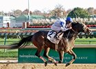14 to Contest Marathon on Breeders' Cup Card