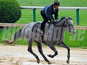 Flashpoint at Pimlico - May 19, 2011.