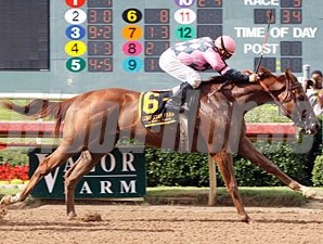 Simply Gone wins the 2010 Texas Stallion Stakes, Staunch Avenger Division.