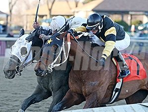 Adirondack King and Sailor's Revenge dead heat in the 2014 Auld Lang Syne Stakes.