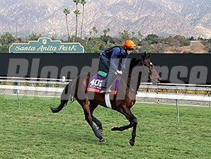 Fiesolana - Breeders' Cup 2014