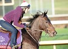 Grade I Winner Harmonious Retired
