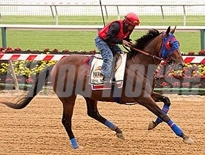 Social Inclusion - Pimlico, May 9, 2014.