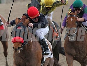 Mambo Galliano wins the 2010 Thanksgiving Handicap.