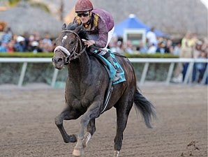 LaPenta Gets Allowance Race for Dialed In