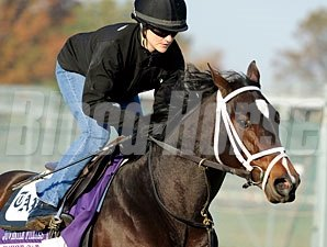 Sweet Cat, Churchill Downs, Oct 29, 2011