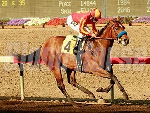 Candrea in the Bill D Shephard Stakes.