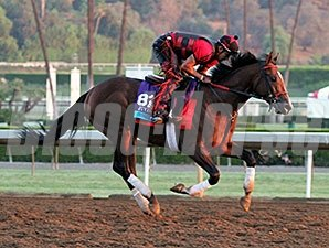 Conquest Typhoon - Breeders' Cup 2014