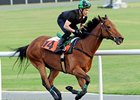 Joy And Fun Back for More in Al Quoz Sprint