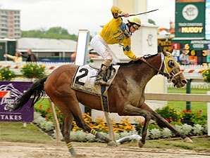 Sweet Vendetta Slops Up Black-Eyed Susan