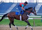 Older Horses Seek Graded Win in Toboggan