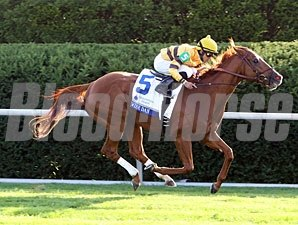 Wise Dan wins the 2012 Shadwell Turf Mile.