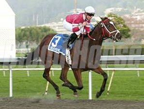 Positive Response wins the 2010 Gold Rush.