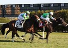 Barbaro Brother Lentenor Second in Turf Debut
