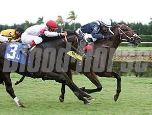 Oligarch wins the 2011 Tropical Park Derby.
