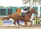 Tampa Bay Derby Contenders in Solid Works
