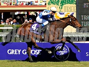 Goldikova wins the 2008 Breeders' Cup Mile.