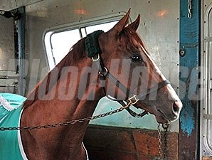 California Chrome riding to Churchill Downs April 28.