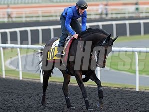 Xtension preps for the Dubai Duty Free.