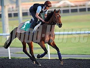 Dunaden - Dubai, March 27, 2013.