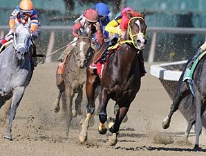 Trinniberg Likely to Pass Kentucky Derby