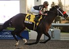 Maritimer Makes His Return in Autumn Stakes