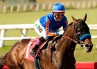 Game On Dude Heads Hollywood Gold Cup Noms